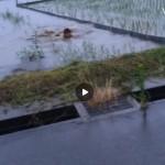 【Vine動画】人の田んぼで何してるんだよwww